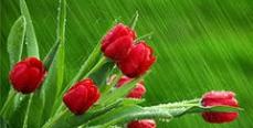AMF международная доставка цветов, дарит поход в ресторан!