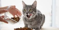 Чем кормить кошек
