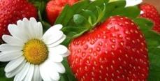 Одежда ягодных цветов